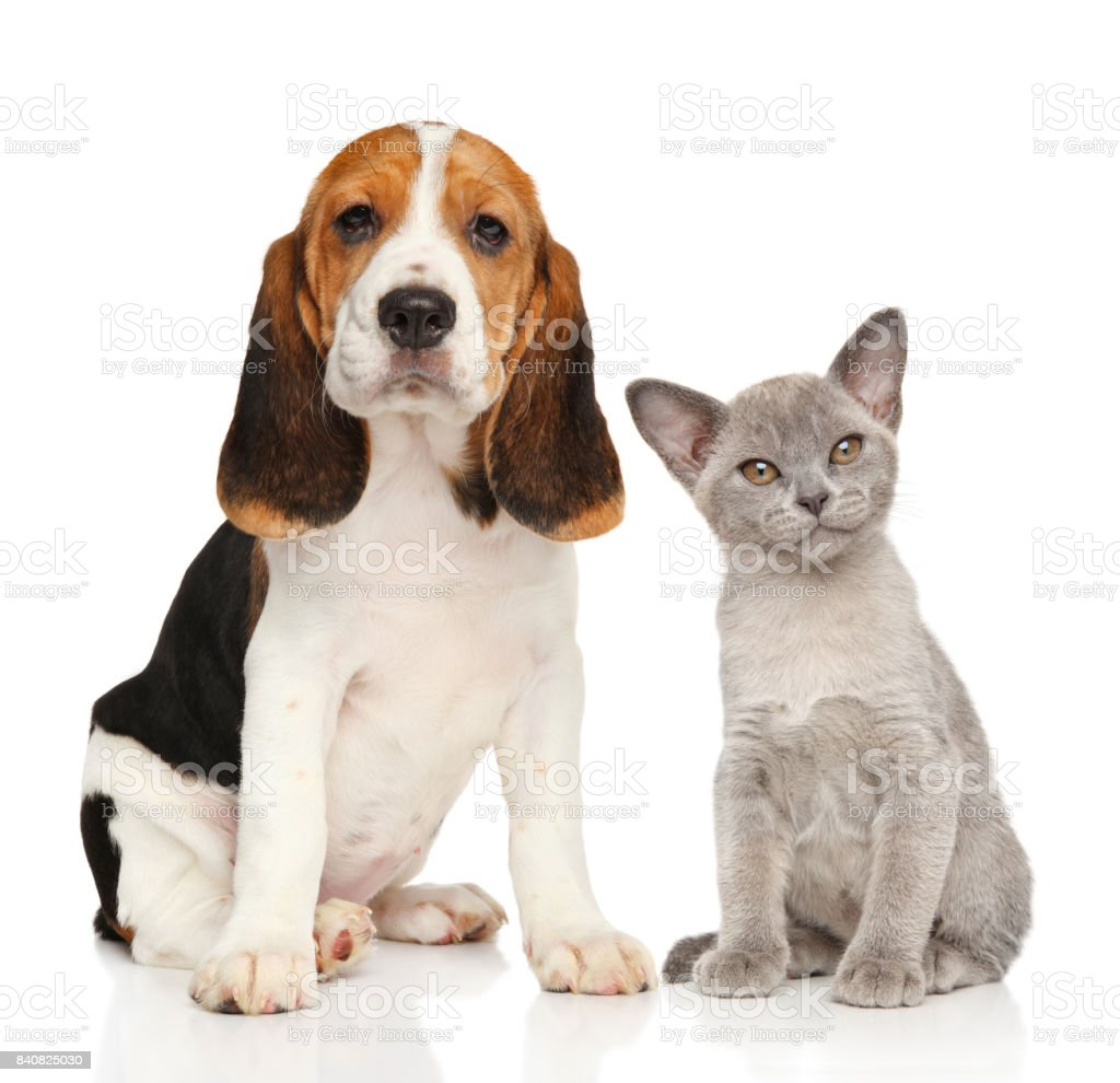 Puppy and kitten together stock photo
