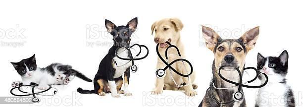 Puppy and kitten vet picture id480564502?b=1&k=6&m=480564502&s=612x612&h=ozpoe eg6qqlvg 9py 2em5tpyqpgz7yu2l8pmmfihs=
