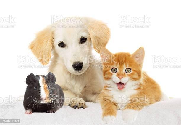 Puppy and kitten watching picture id493517204?b=1&k=6&m=493517204&s=612x612&h=5aaje6ywq8akvx4dg78xcxu8gfb2l isivslndw2fi0=