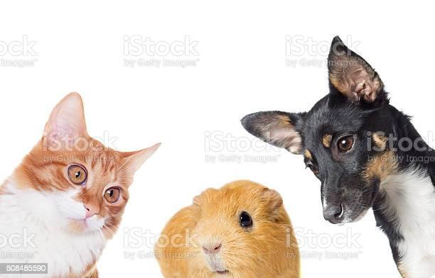 Puppy and kitten watching picture id508485590?b=1&k=6&m=508485590&s=612x612&h=tzol4wpa7dvb0nx ndk5lojply78o8dhsg5umqlerga=
