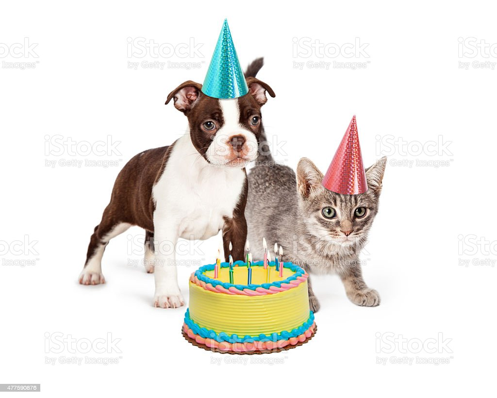 Groovy Puppy And Kitten With Birthday Cake Stock Photo Download Image Funny Birthday Cards Online Necthendildamsfinfo