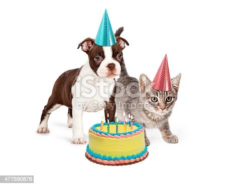 istock Puppy and Kitten With Birthday Cake 477590876