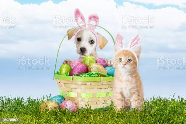 Puppy and kitten with easter basket picture id930286802?b=1&k=6&m=930286802&s=612x612&h=4eyvyxunexb3ybrcskmmus4kzkeme 7ioupox f3aui=