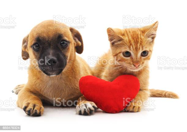 Puppy and kitten with heart picture id655476324?b=1&k=6&m=655476324&s=612x612&h=esrrnxgrfdt rob 5zus9uxdndr0uksk1qtatruu34w=