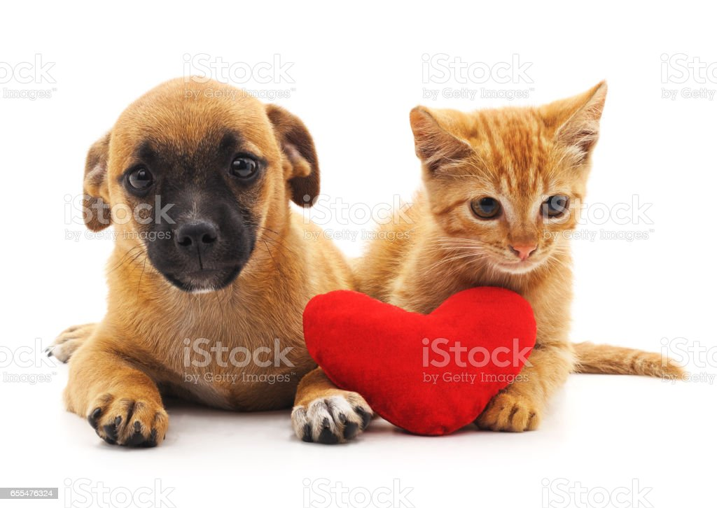 Puppy and kitten with heart. stock photo