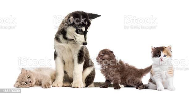 Puppy and kittens picture id483420099?b=1&k=6&m=483420099&s=612x612&h=jzcuajkc9bmqoi3ztl5lqcq1byro0 iinm1gsn5diwe=
