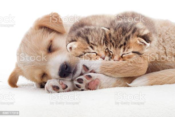 Puppy and kittens sleeps picture id538777319?b=1&k=6&m=538777319&s=612x612&h=zrfrfbomxcckyekcuzuvna6bzikfhryca9or8ld8s6e=