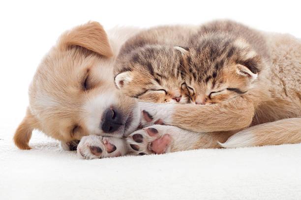 Welpen und Kätzchen für – Foto