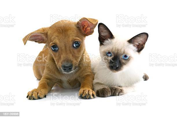 Puppy and kitty picture id183139998?b=1&k=6&m=183139998&s=612x612&h=dmsivtataqqas47lc0gidyvruud hkpj9yxjccpg1do=
