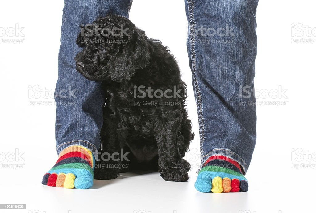 puppy and owner stock photo