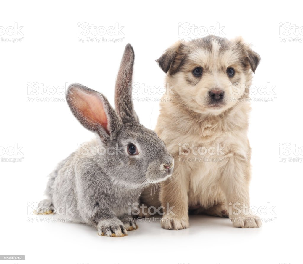 Puppy and  rabbit. royalty-free stock photo