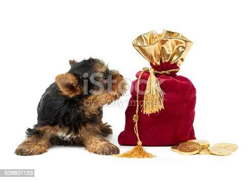 482747823istockphoto Puppy and sack 526807133