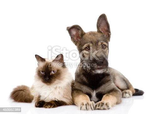 istock puppy and siamese cat together 453552389