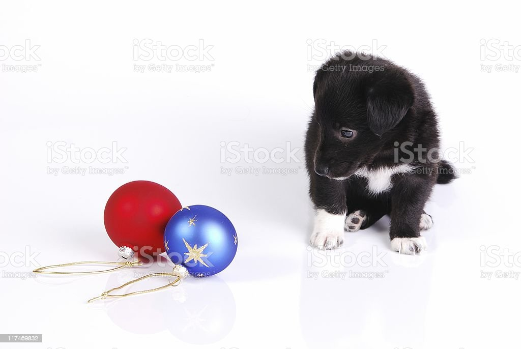 Puppy and two Christmas balls royalty-free stock photo