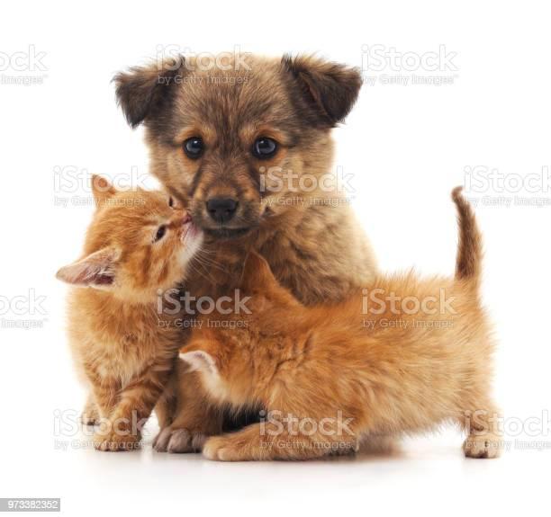 Puppy and two kittens picture id973382352?b=1&k=6&m=973382352&s=612x612&h=ceztcltlci9zig 3vcq kfe0gw7ewbkqvszj xqj7es=