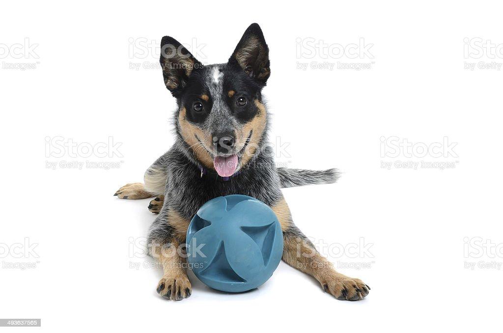 Piłka Puppy