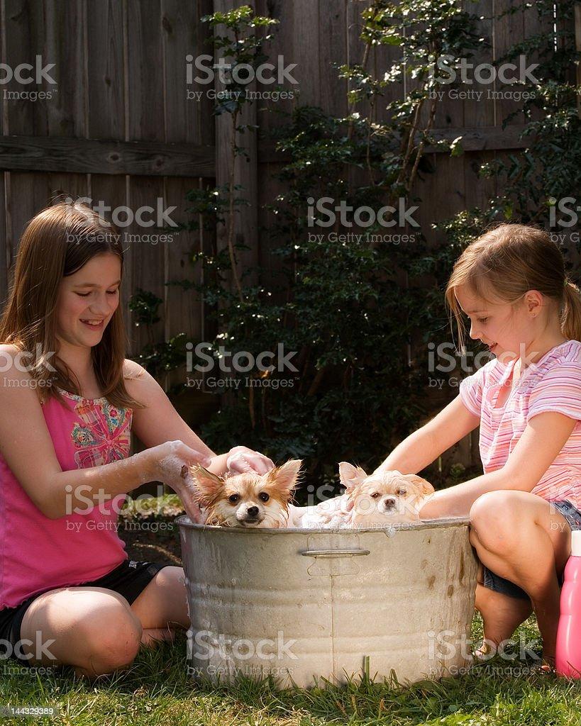 Puppy Bath royalty-free stock photo