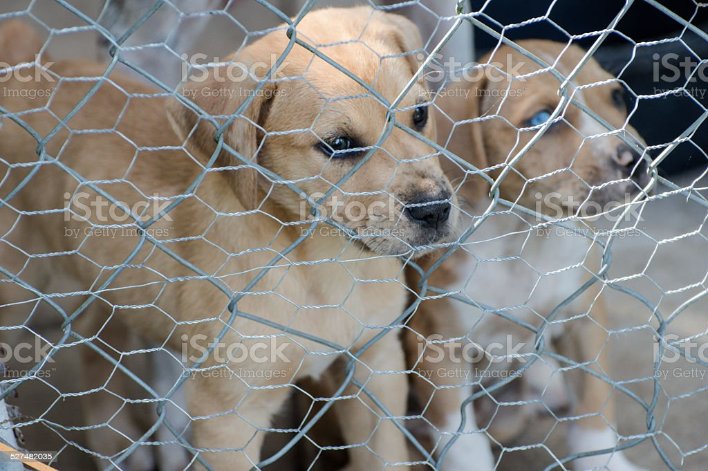 Puppy behind fence stock photo