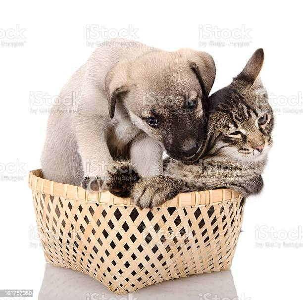 Puppy bites a kitten picture id161757080?b=1&k=6&m=161757080&s=612x612&h=sv 2a0xl1u3wwcni97oumdejetsib2zxlopdff 2qa8=