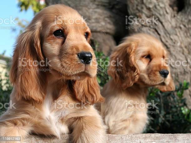 Puppy brothers picture id115912163?b=1&k=6&m=115912163&s=612x612&h=buijozjdenhmar5zstipkojkydirah1uzh21yhflcju=