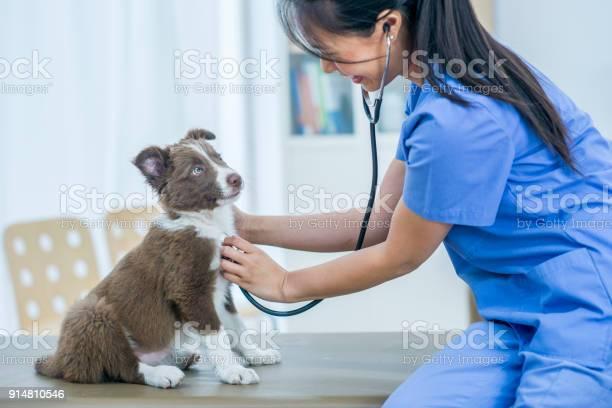 Puppy checkup picture id914810546?b=1&k=6&m=914810546&s=612x612&h=9ztomsvftzwlbtkhqbx544ajfxg0n34faqrmez6ukbs=