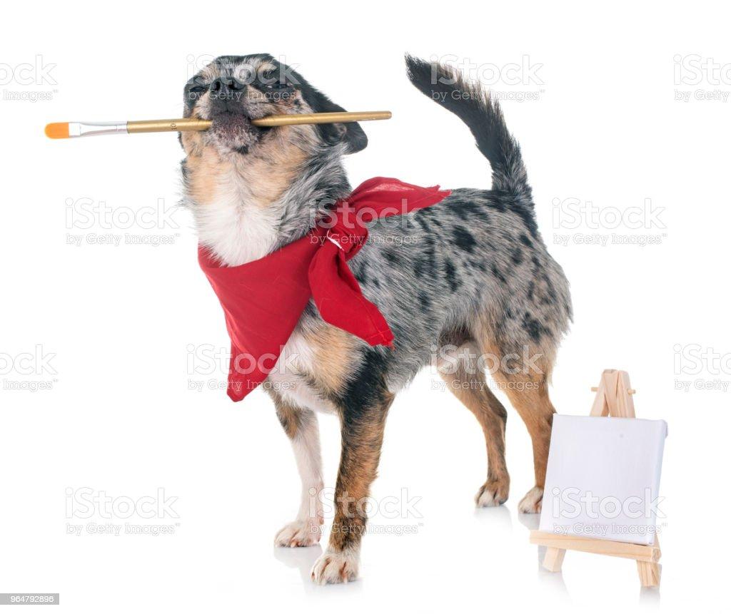 puppy chihuahua royalty-free stock photo