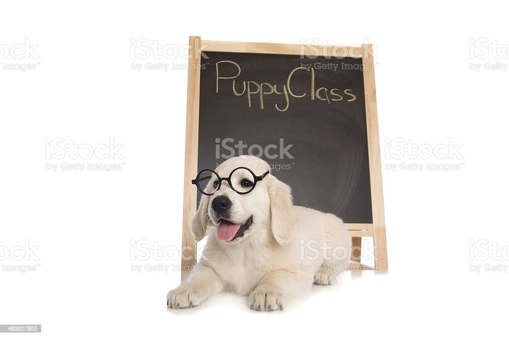 Puppy Class stock photo