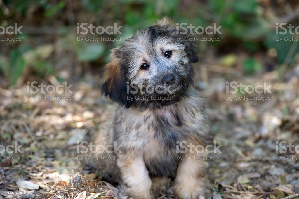 Puppy Cute Curious Happy Fluffy Looking Outdoors Closeup stock photo