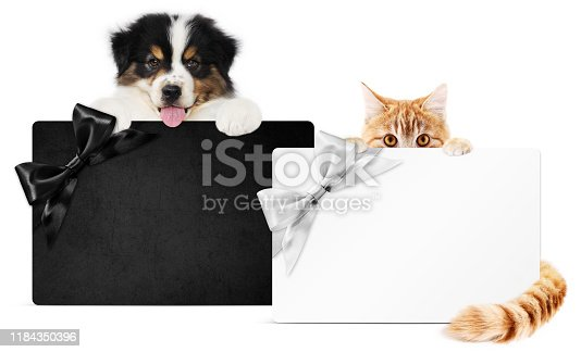 670414478 istock photo puppy dog and cat pets together showing  black and silver gift card isolated on white background blank template and copy space, black friday and cyber monday concept 1184350396