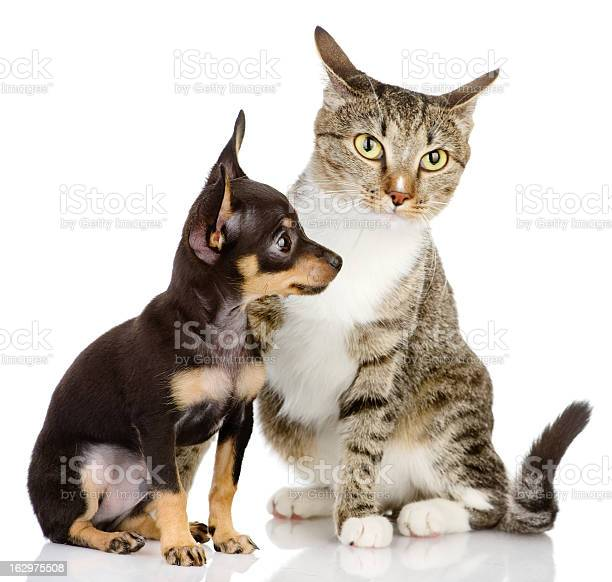Puppy dog and cat picture id162975508?b=1&k=6&m=162975508&s=612x612&h=hn cv83d8iihqmbhxrontusmkmt qtqboub6bgkdiwe=