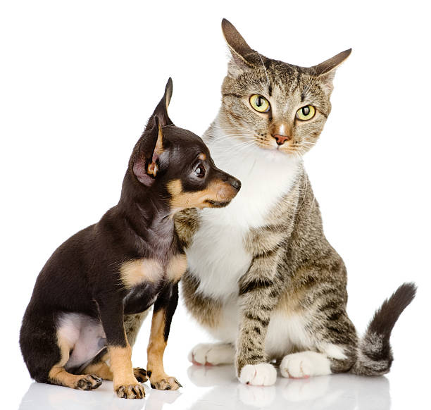 Puppy dog and cat picture id162975508?b=1&k=6&m=162975508&s=612x612&w=0&h=qmfifasut7w3bc5qvtkdoo3myscixrh8uuknv6a rzy=