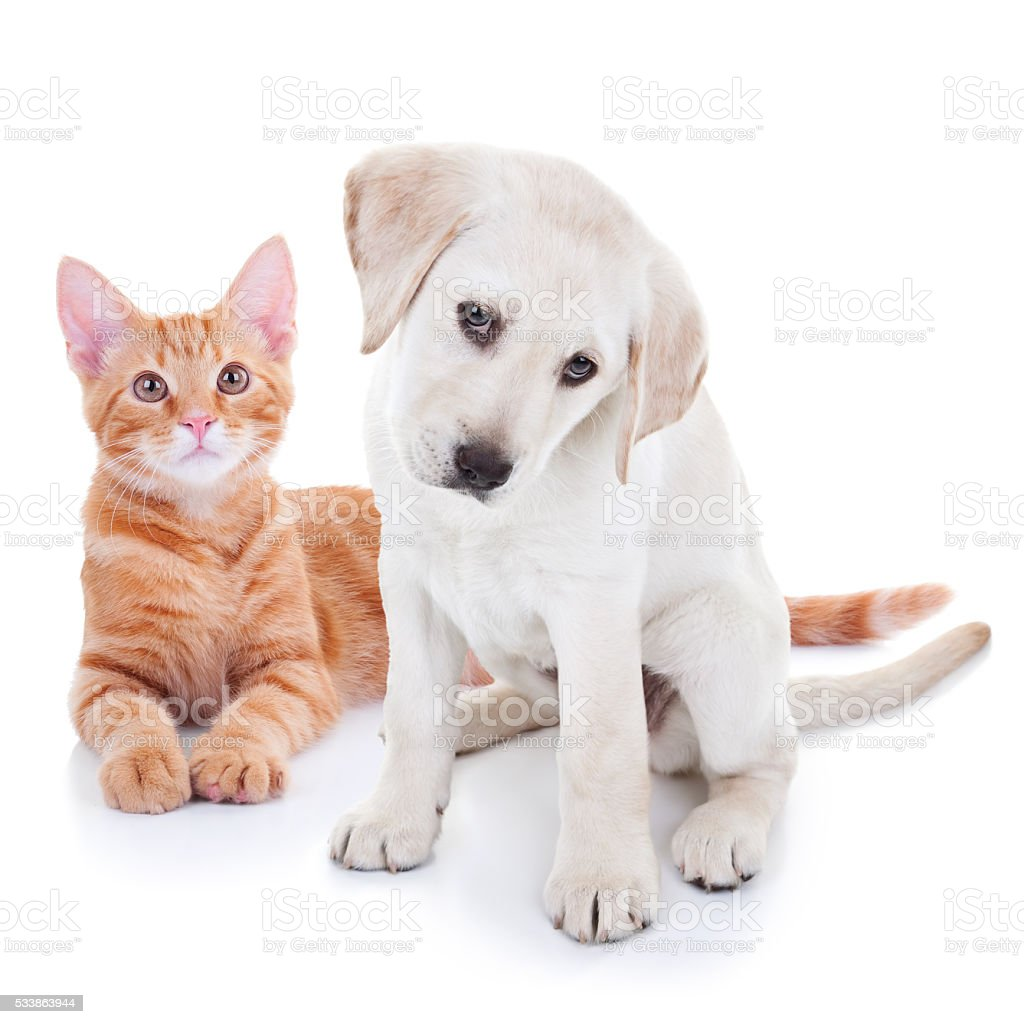 Puppy Dog And Kitten Cat Pets stock photo