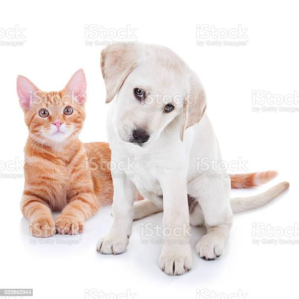Puppy dog and kitten cat pets picture id533863944?b=1&k=6&m=533863944&s=612x612&h=jpxmw2ex1i5irzmy7jcl2xwho4dcynljqd56n8vomfk=