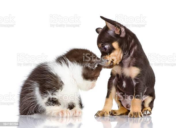Puppy dog and sad kitten picture id164192294?b=1&k=6&m=164192294&s=612x612&h=ros3vp8ewvigexzmmvpa9 ar y3uwqavlsbcmtrvzxw=