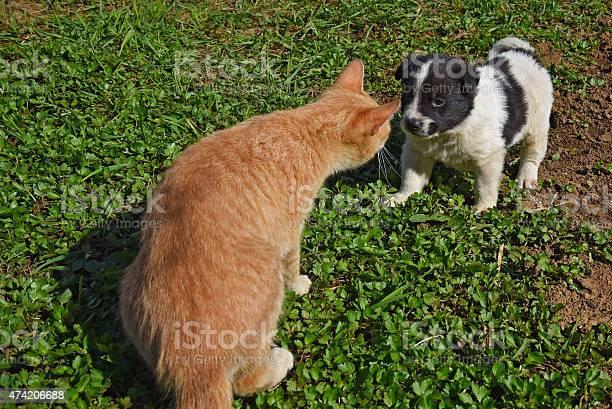 Puppy dog cat picture id474206688?b=1&k=6&m=474206688&s=612x612&h=3zazbcowfwlohmhlxrvrsdded3z2dljecstgpi0yh1g=