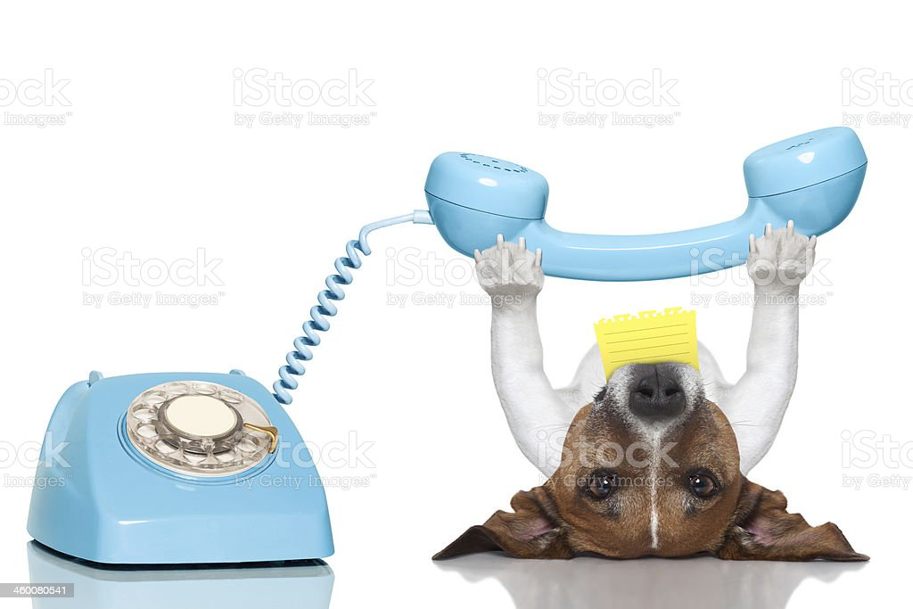Puppy dog lays on his back answering a blue rotary phone stock photo