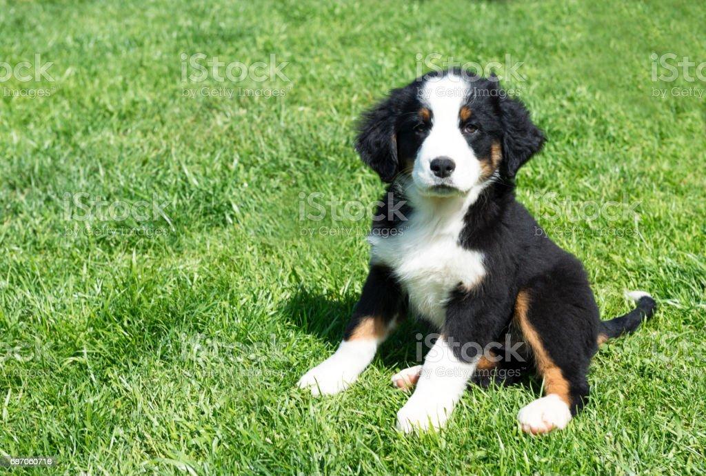Puppy Dog - Photo