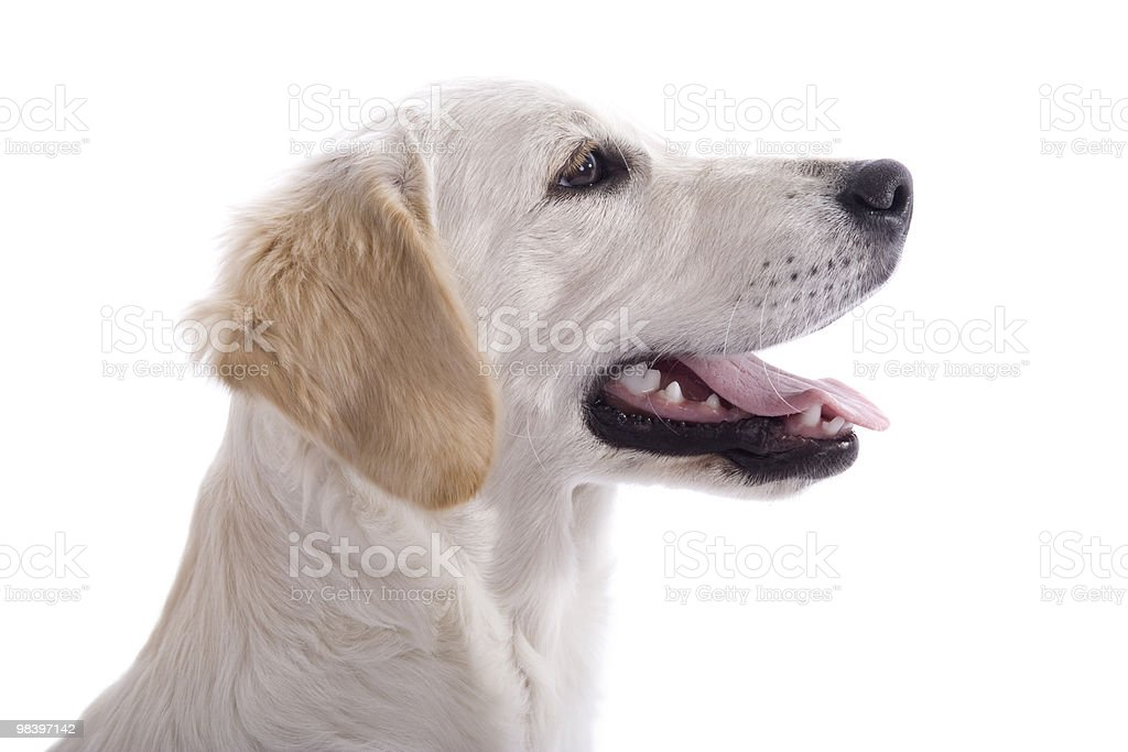 Puppy dog profile royalty-free stock photo