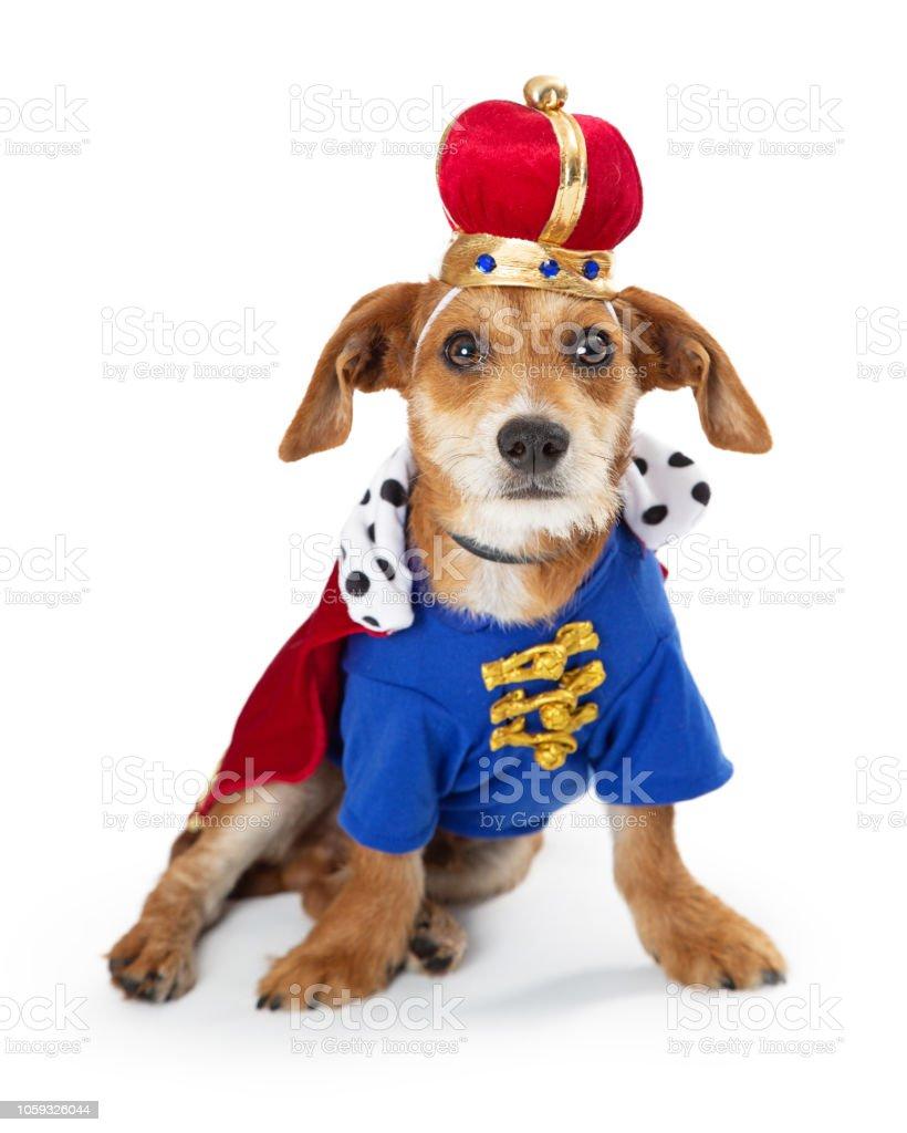 Original- Vielzahl von Designs und Farben neue auswahl Puppy Hund König Halloweenkostüm Stockfoto und mehr Bilder von Cape