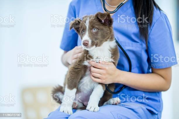 Puppy exam picture id1128072732?b=1&k=6&m=1128072732&s=612x612&h=b2bk2bitu16yfy20lzqlaz9tkrwe3o9ph2umftznwlq=
