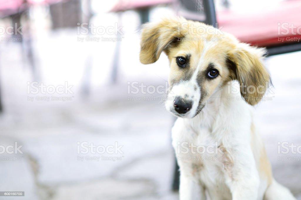 Puppy eyes stok fotoğrafı