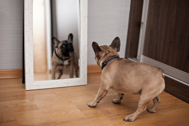 Puppy Facing His Reflection in the Mirror stock photo
