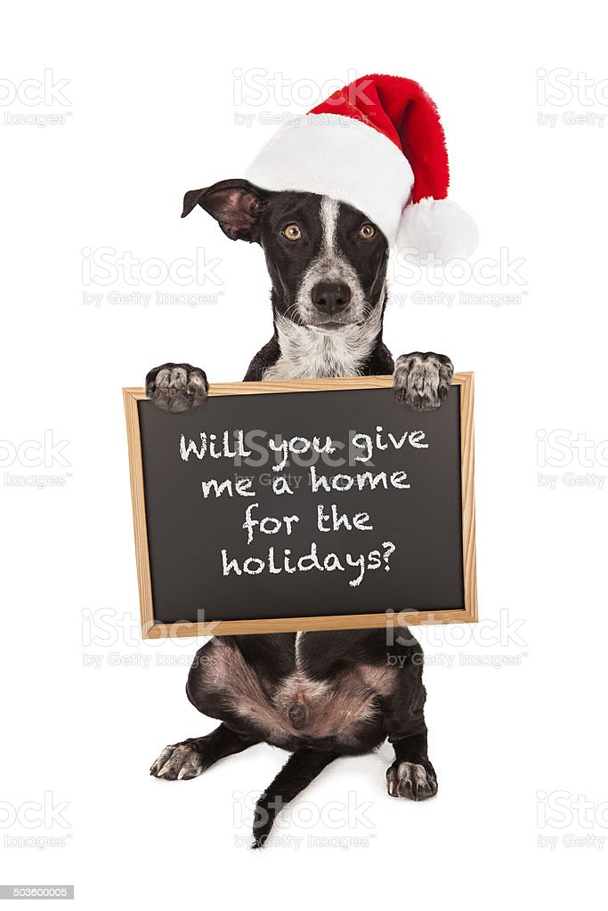 Puppy For Christmas stock photo