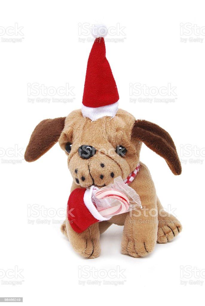 강아지 선물 royalty-free 스톡 사진