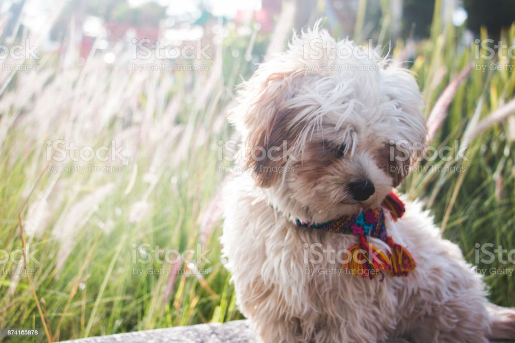 Puppy, head down with a green background. stock photo