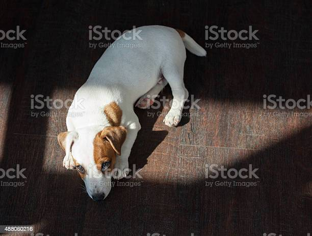Puppy Illness Stock Photo - Download Image Now