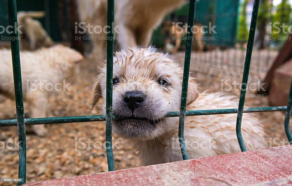 Puppy in a cage. stock photo