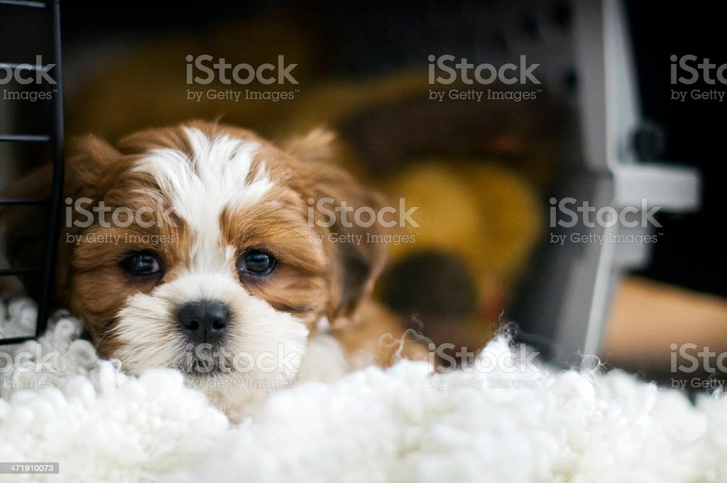 Puppy in a crate stock photo