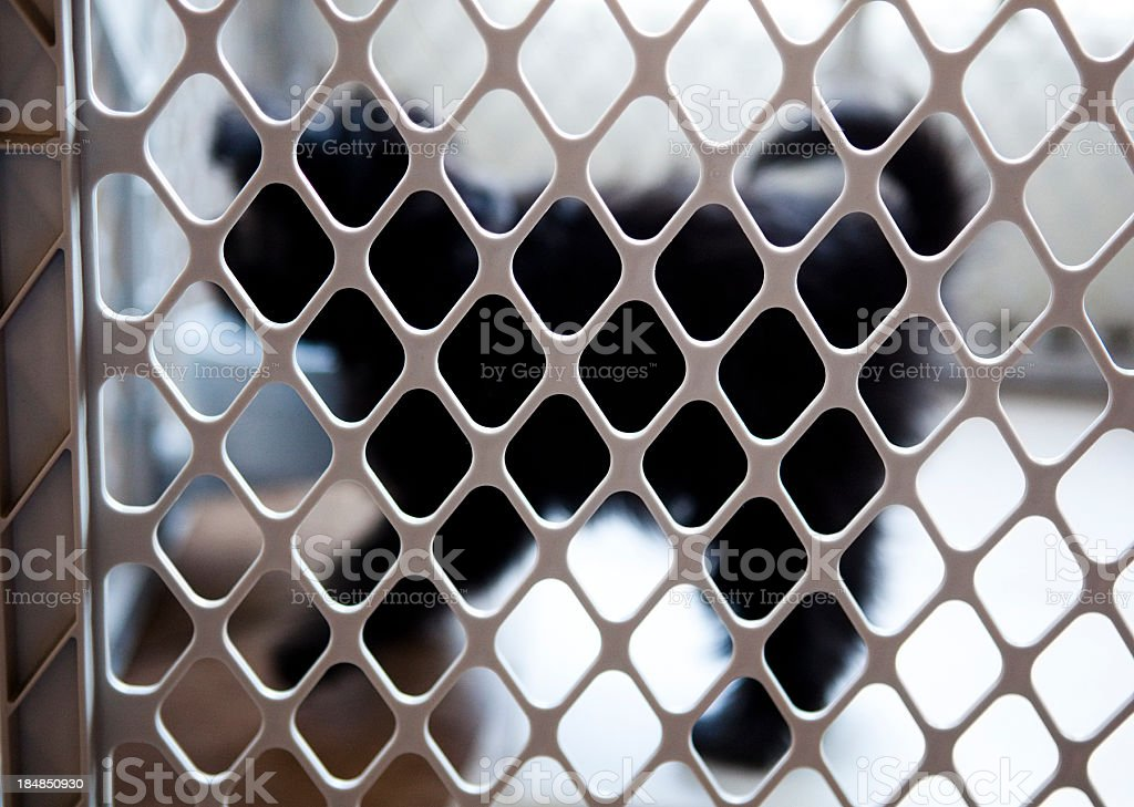 Puppy in a Dog Play Pen stock photo