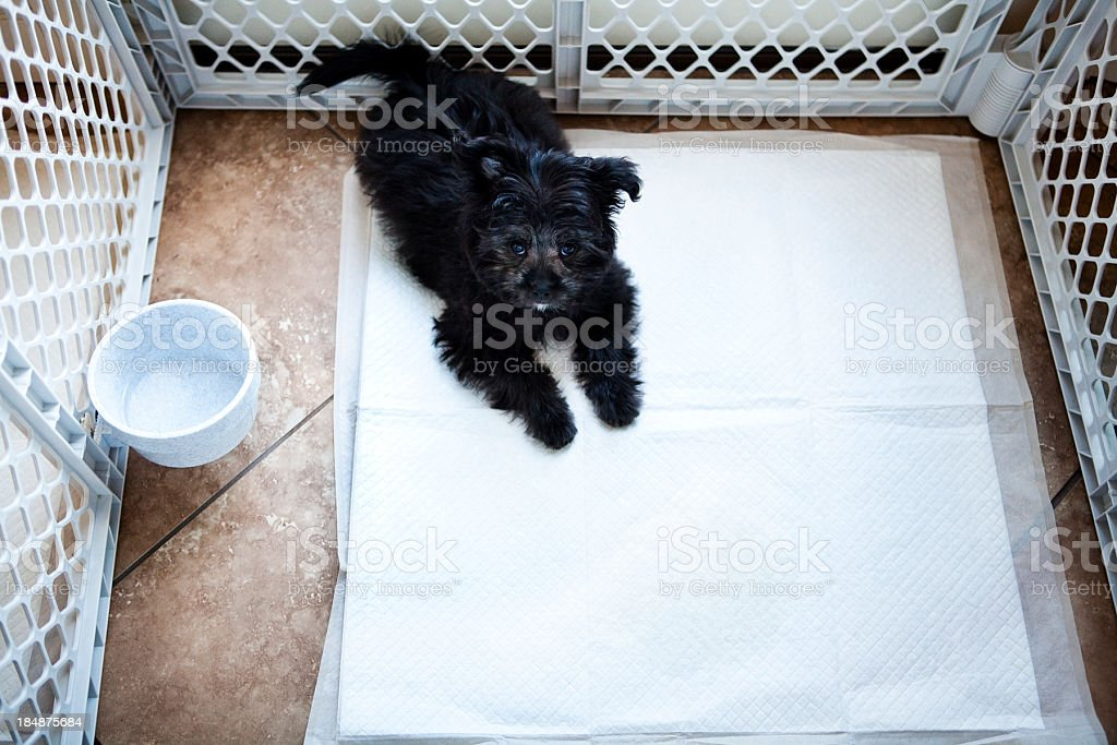 Puppy in a Play Pen stock photo